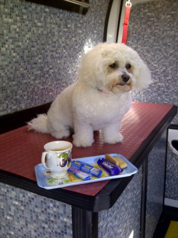 Mobile Dog Grooming Buxton